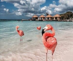 flamingo, beach, and animal image