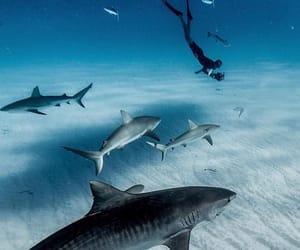 background, bahamas, and blue image