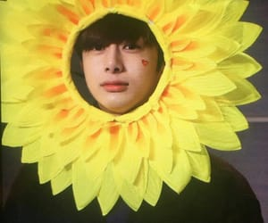 adorable, sunflower, and cute image