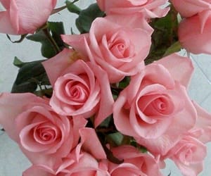 rose, pink, and pretty image