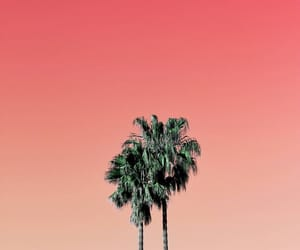 aesthetic, alternative, and palms image