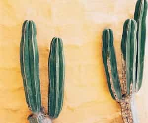 cactus, yellow, and green image