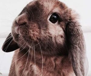 bunny, pets, and animals image