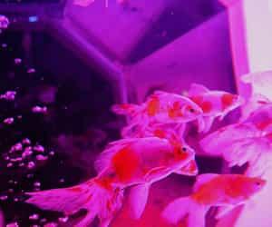 aesthetic, aquarium, and pink image