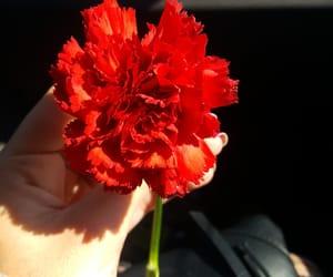 alternative, flor, and naturaleza image