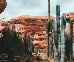 cactus, desert, and plants image