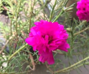 flores and jardim image