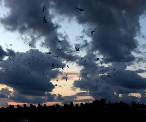 beautiful, birds, and sky image