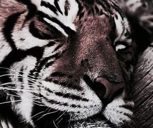 animals, madison beer theme, and tigers image