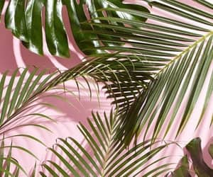 Wallpaper Pink And Plants Image