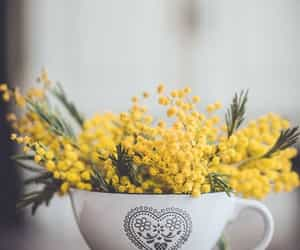 flower, mimosa, and yellow image