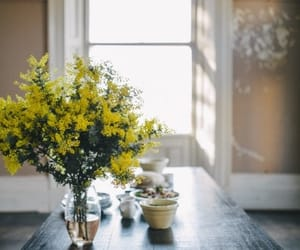 flowers and mimosa image