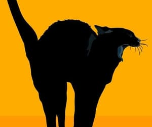 Animales, black, and cats image
