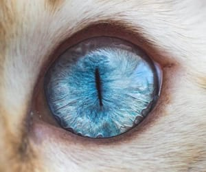 cat, eye, and blue image