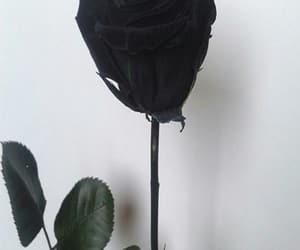 black, rose, and flower image