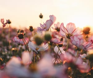 pink, flowers, and sun image