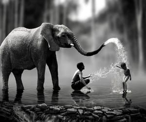elephant, water, and black and white image