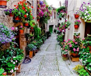 flowers, street, and nature image