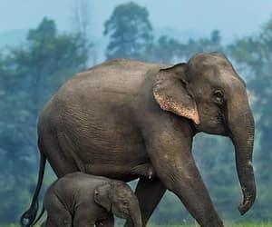 Animales, belleza, and elefantes image