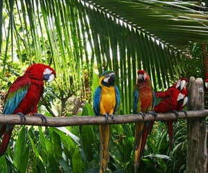 bird and tropical image