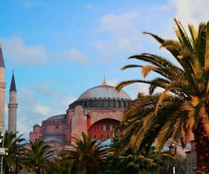 beautiful, istanbul, and palm tree image