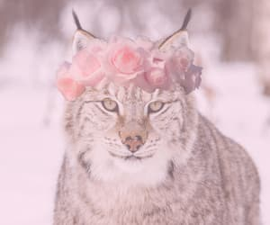 big cat, flower crown, and pink image