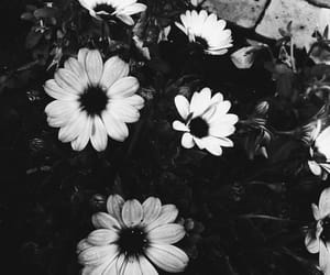 blanco y negro, flores, and tumblr image