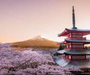 cherry blossoms, japan, and mount fuji image