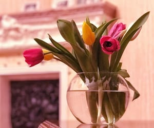 tulip, tulips, and lale image