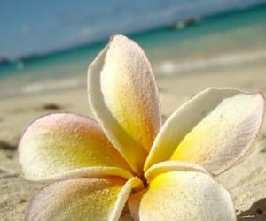 flowers, beach, and sand image