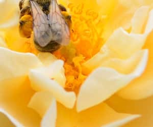 bees, flowers, and macro image