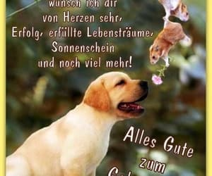 deutsch, hunde, and geburtstag image