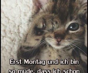 deutsch, katzen, and grüße image