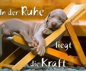 deutsch, lustige bilder, and dogs image