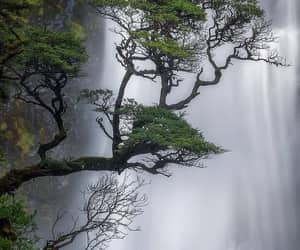 forest, landscape, and naturaleza image