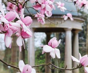 blossom, spring, and mangolia image