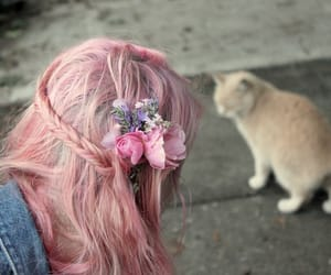 cat and pink image