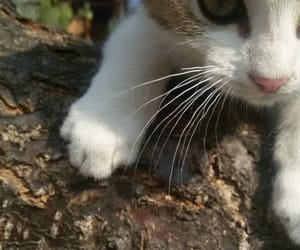cat, indie, and nature image
