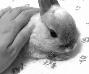 gif and baby rabbit image