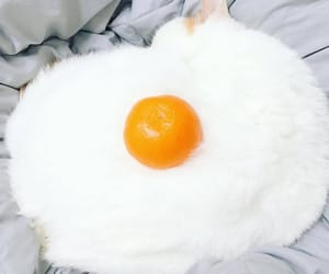 cats, kitten, and orange image