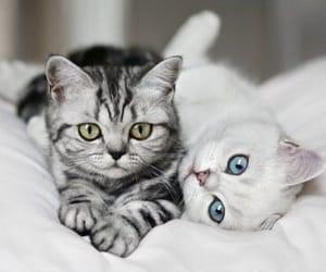 animal, animals, and blue image