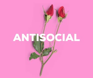 antisocial, background, and flowers image