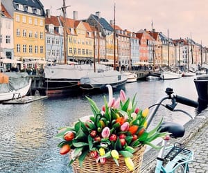 bicycle, photo, and spring image