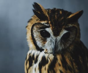 animal, japan, and owl image