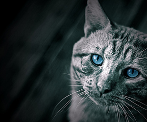 blue and cat image