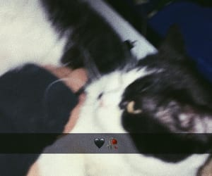 blurred, cat, and imac image