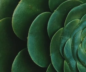 aesthetic, plants, and green image