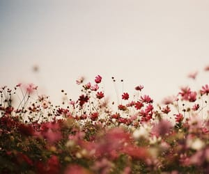 cosmos, film, and nature image