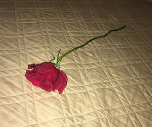 bed, rose, and smell image