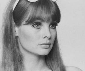 vintage, 60s, and jean shrimpton image